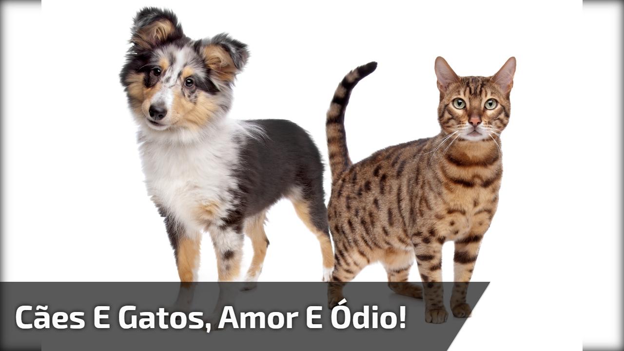 Cães e gatos, amor e ódio!