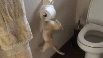 Gatos E Cães Que Adoram Fazer Bagunça Com Papel Higiênico!