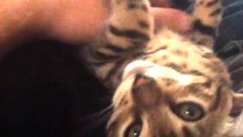 Gatos E Seus Miados Mais Hilários, É Um Mais Diferente Que O Outro!