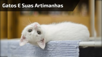 Gatos E Suas Artimanhas, Da Uma Olhada No Que Este Esta Fazendo!