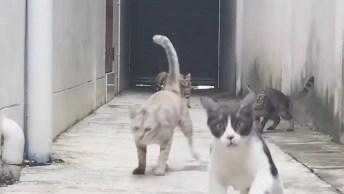 Gatos E Suas Reações Engraçadas Hahaha, Como Não Amá-Los?