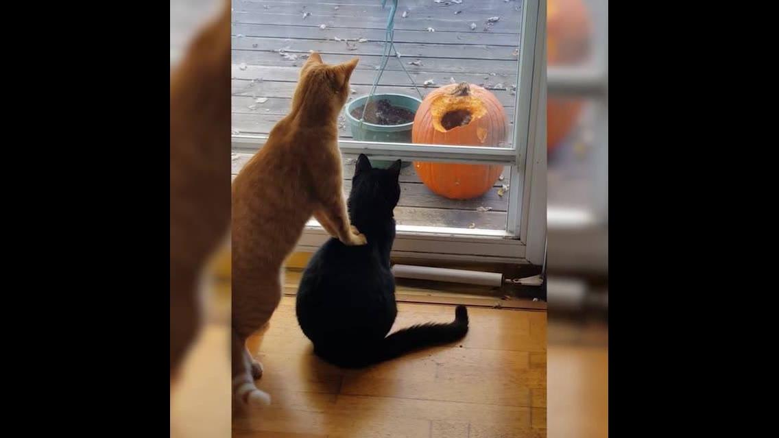 Gatos em seus momentos de caça