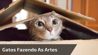 Gatos Fazendo As Artes Mais Engraçadas Que Você Vai Ver Hoje!