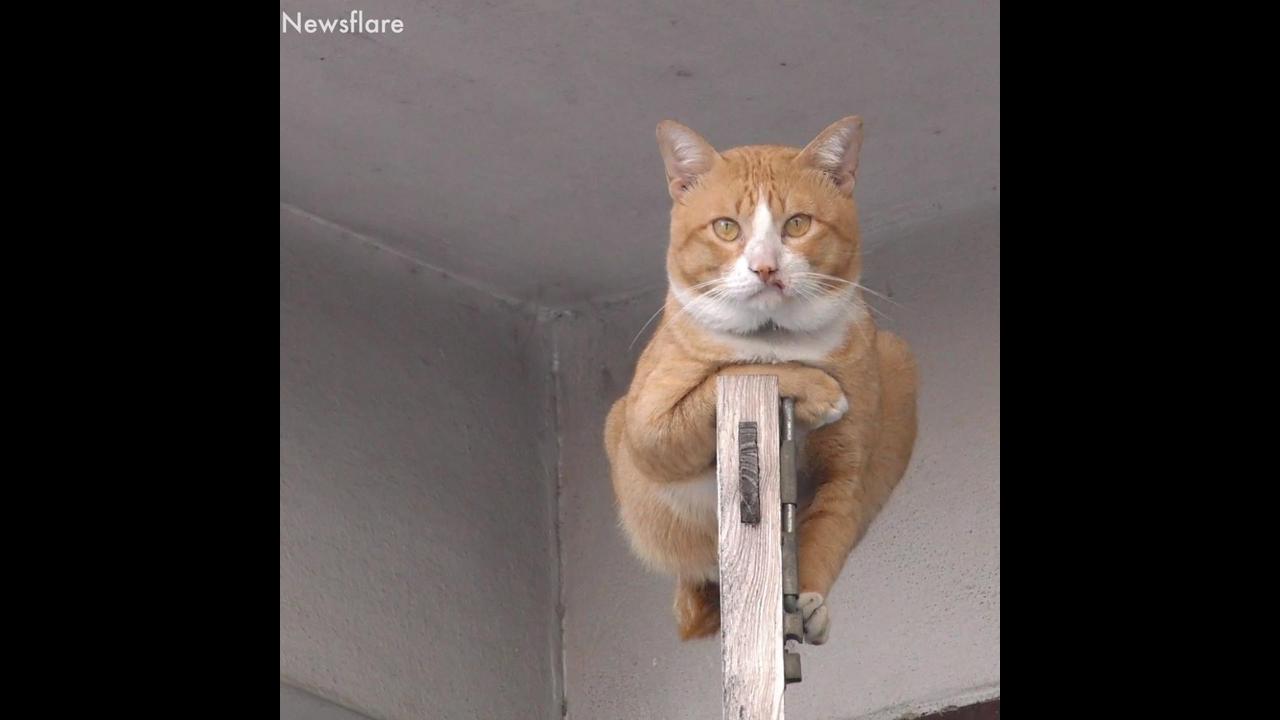 Gatos fazendo coisas engraçadas, você vai dar muitas risadas com eles hahaha!