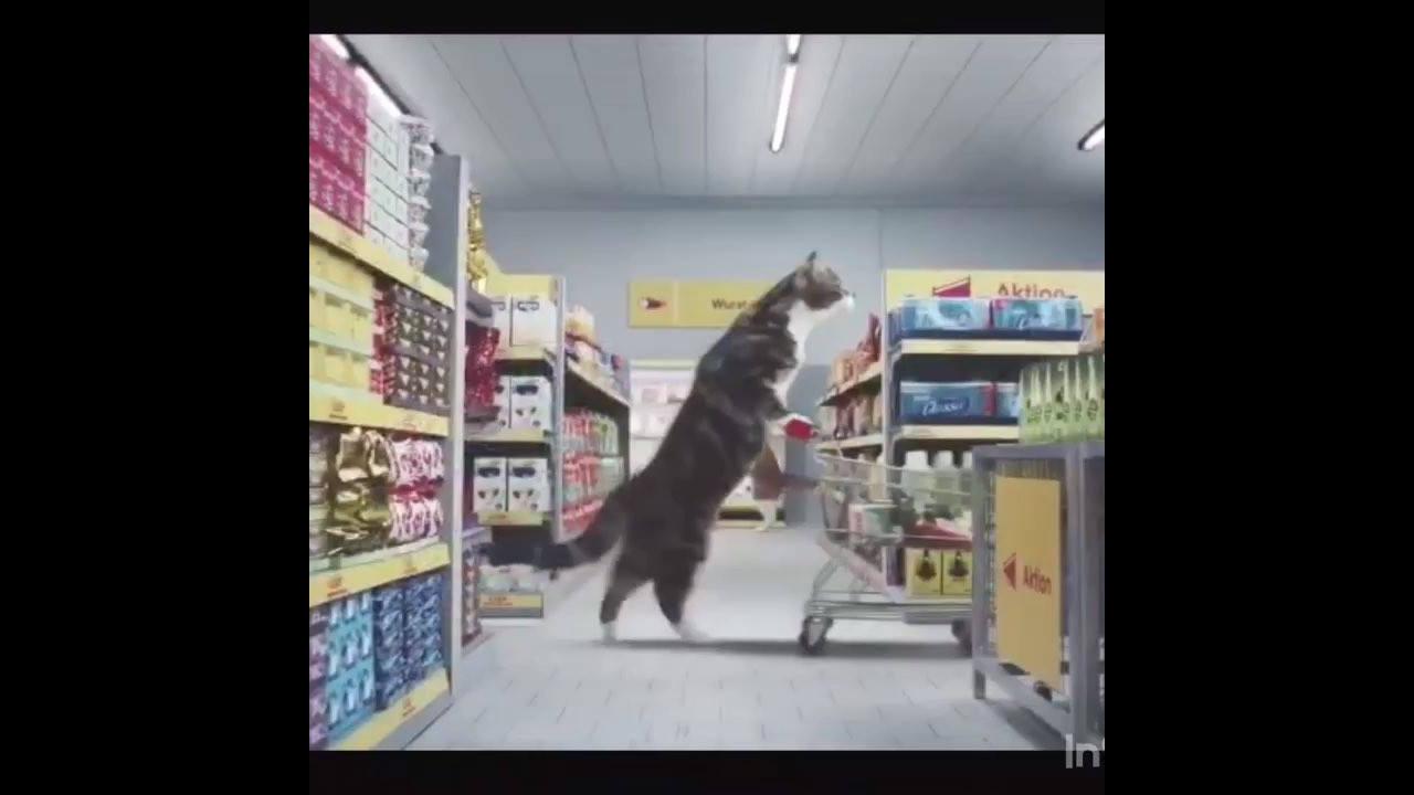 Gatos fazendo compra no mercado