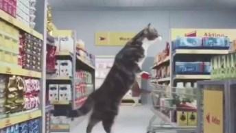 Gatos Fazendo Compra No Mercado, Olha O Que Aprontaram Hahaha!