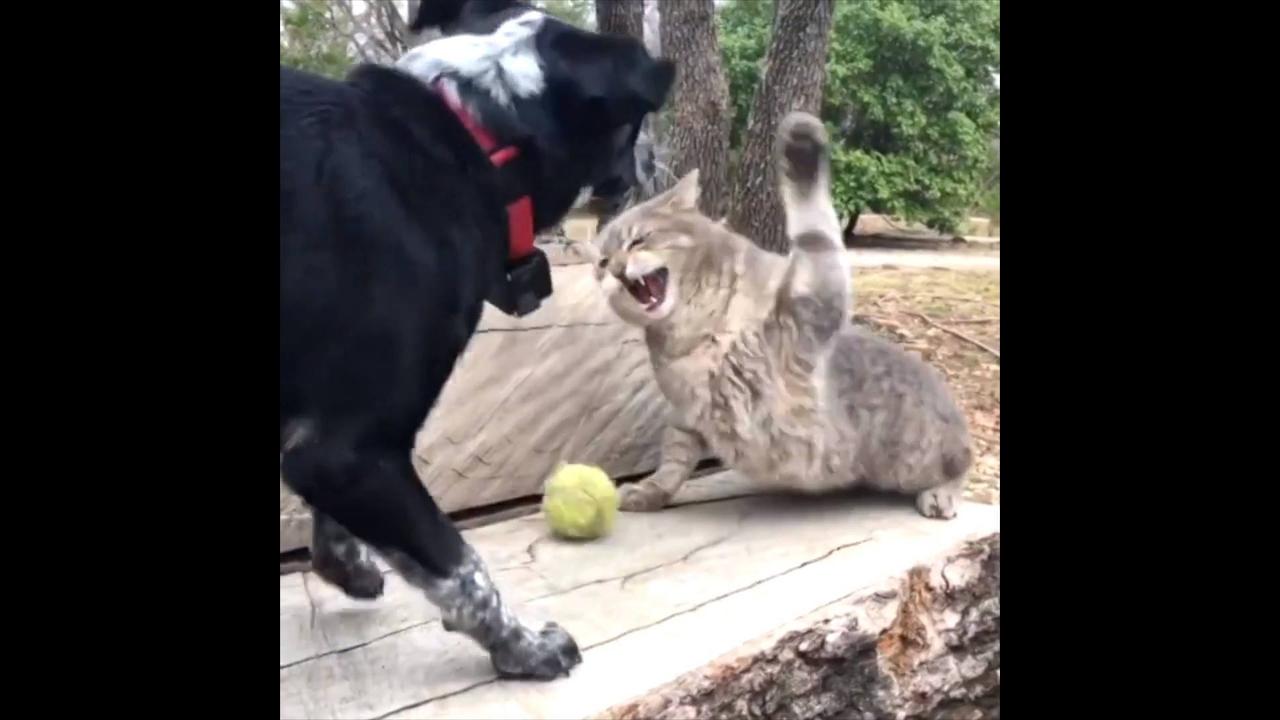 Gatos mais engraçados da internet