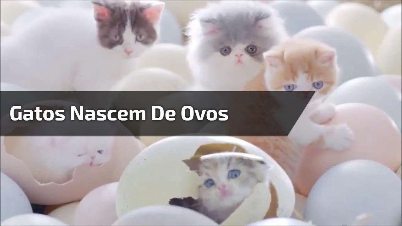Gatos nascem dos ovos? Veja que video incrível e fofo!!!