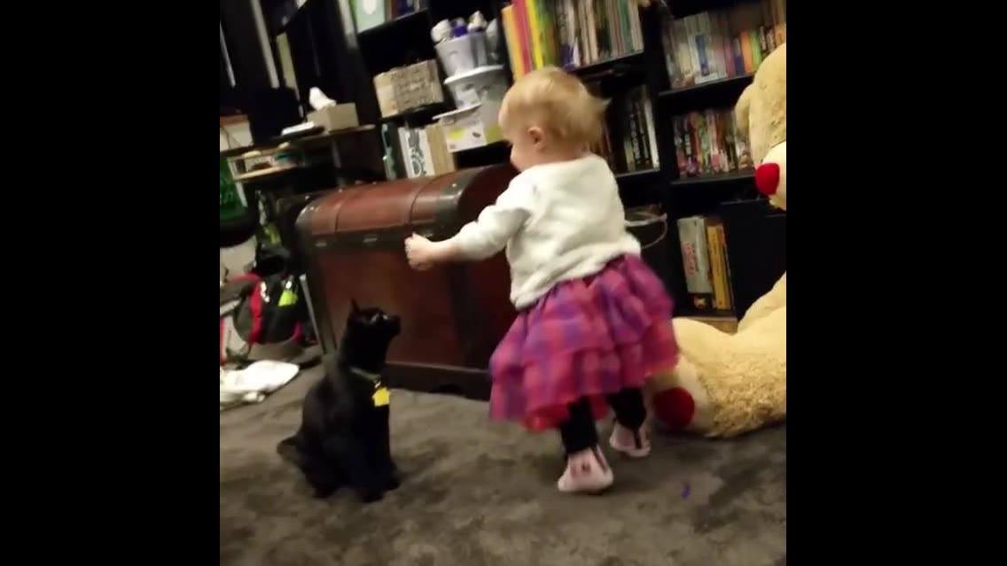 Gatos que não sabem brincar com crianças hahaha