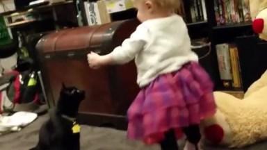 Gatos Que Não Sabem Brincar Com Crianças Hahaha, Eles São Fofos Demais!