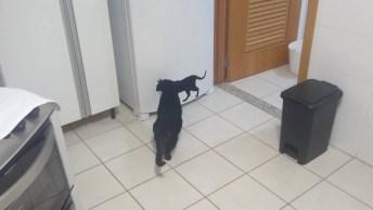 Gatos Querendo Brigar Com Amigo Que Esta Quetinho Na Geladeira, Kkk!