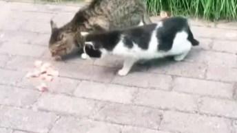 Gatos Sendo Gatos, As Artes Que Você Vai Ver Neste Vídeo São Demais!
