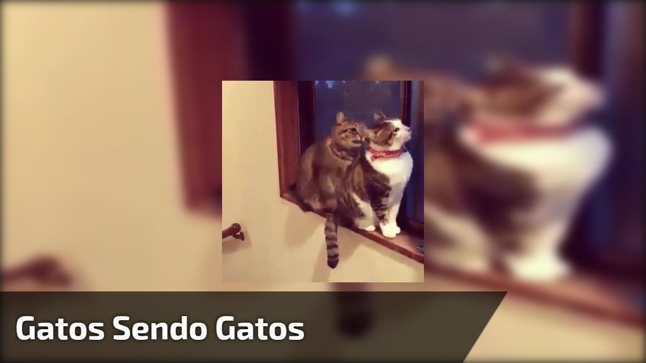 Gatos sendo gatos