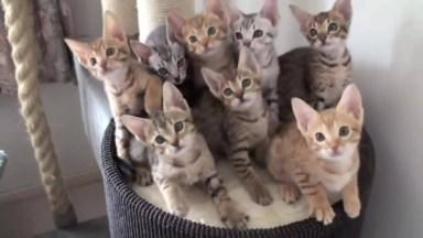 Gatos Sincronizados - Marque Aquela Pessoa Que Ama Gatos!