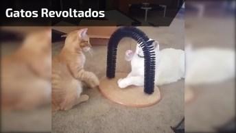 Gatos Tendo Seus Momentos De Revolta, Que Fofura Eles São Até Nessas Horas!