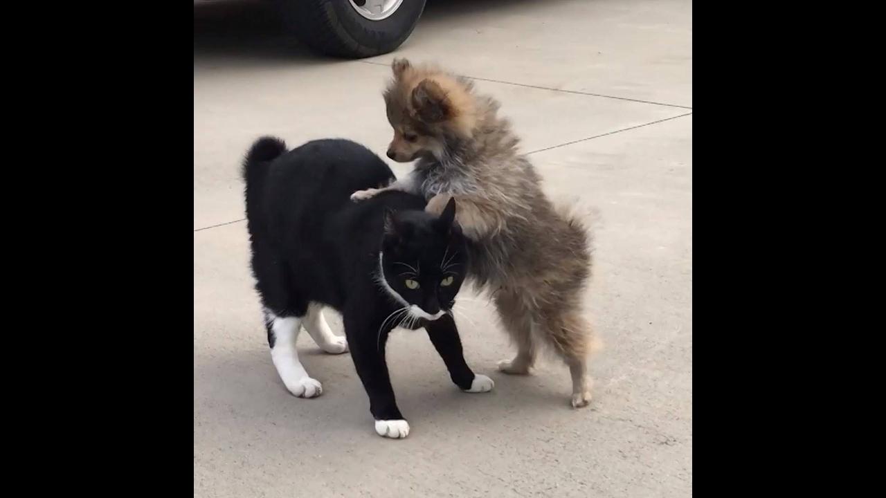 Gatos versus cães