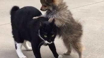 Gatos Versus Cães, Tente Não Rir Com Esta Galerinha Que Apronta Todas!