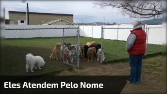 Gente Passada Aqui, Que Incrível! Eles Atendem Pelo Nome! Amo Os Cães!