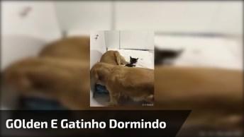 Golden E Gatinho Dormindo Juntinhos, Olha Só Que Cena Mais Doce!