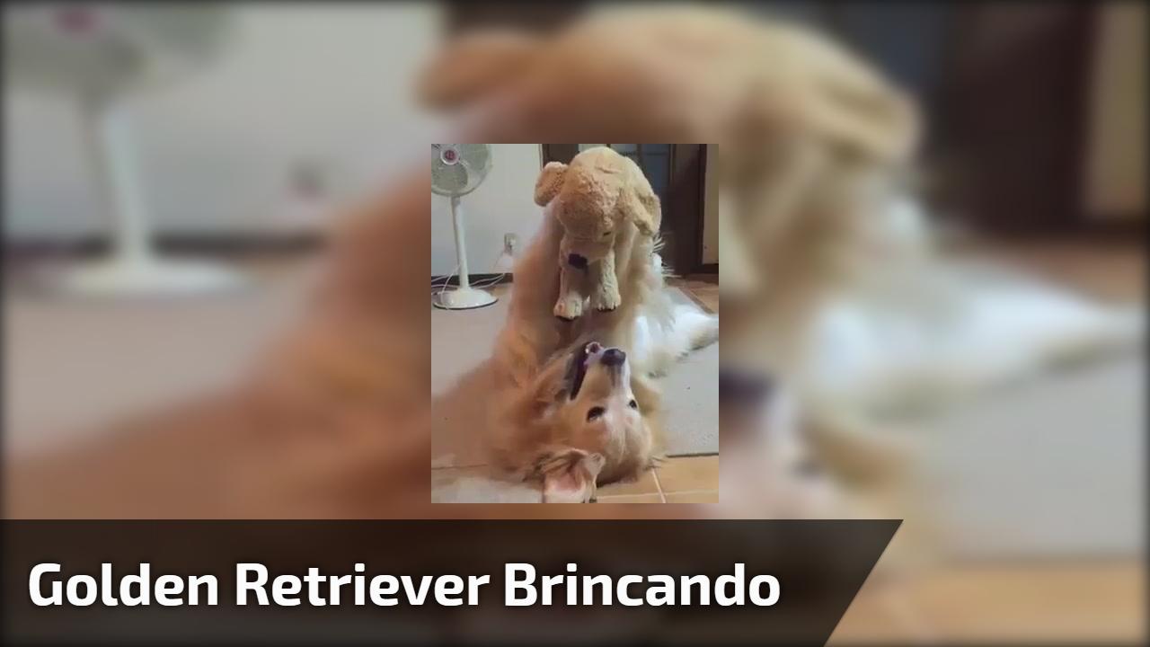 Golden retriever brincando com seu cachorrinho de pelúcia, que fofura!!!