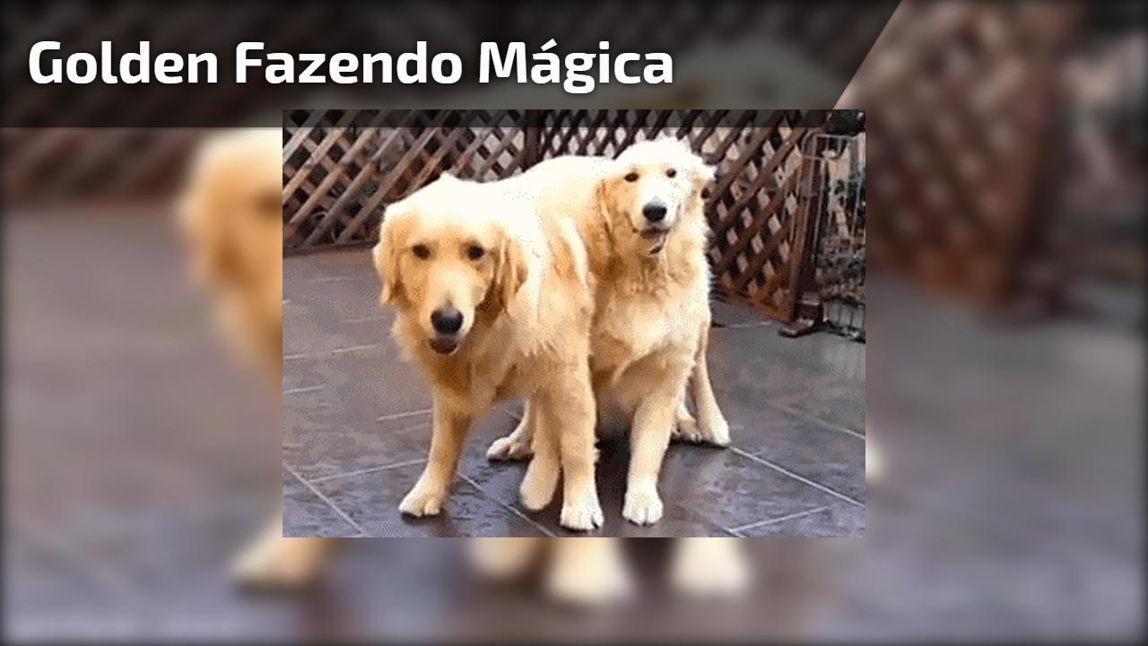 Golden fazendo mágica