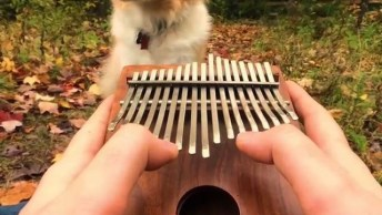 Golden Retriever Fica Quietinho Ouvindo Seu Dono Tocar Uma Música!
