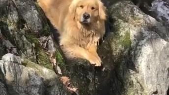 Golden Retriever Relaxando Na Cachoeira, Olha Só A Carinha Dele!