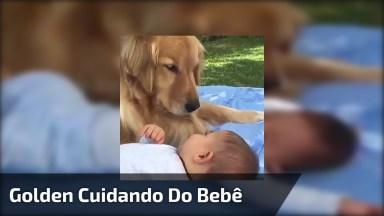 Golden Retriever Vigiando Bebê, Olha Só Que Coisinha Mais Fofinha!