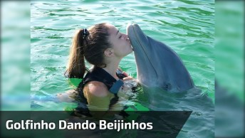 Golfinho Dando Muitos Beijinhos, Veja Que Amor De Animal Gente!