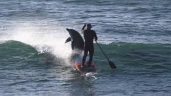 Golfinho Derruba Surfista Da Prancha, Olha Só O Susto Que Ele Deve Ter Levado!