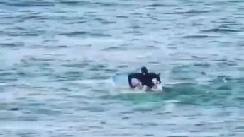Golfinhos Derrubando Um Humano Que Estava No Caminho Hahaha!