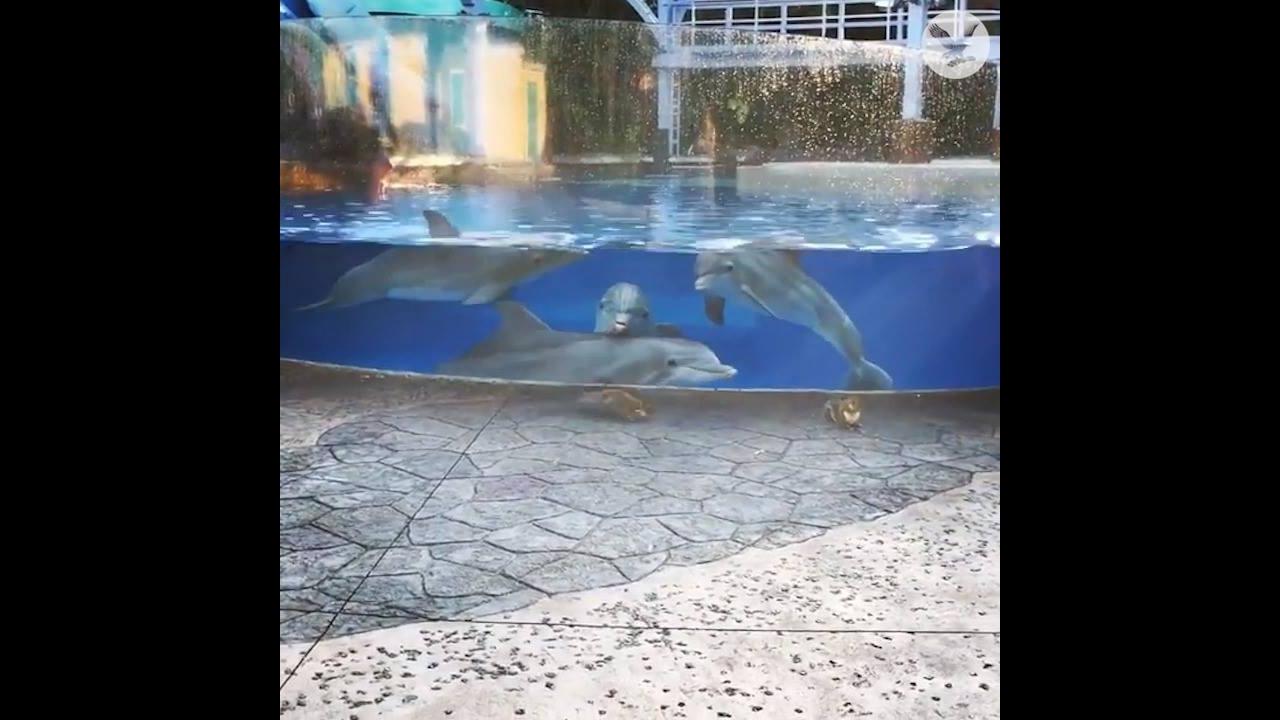 Golfinhos encantados com esquilos