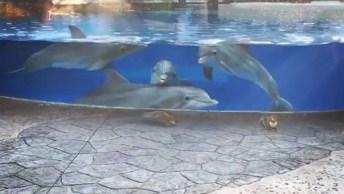 Golfinhos Encantados Com Esquilos, Olha Só Que Coisa Mais Linda Este Vídeo!