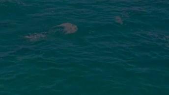 Golfinhos Nadando Em Alto Mar, Veja Que Imagens Maravilhosas!