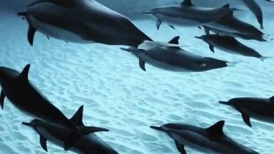 Golfinhos Nadando Tranquilamente No Fundo Do Mar, Que Linda Imagem!