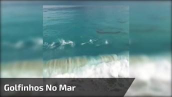 Golfinhos No Mar Vista De Cima, Olha Só Que Imagens Fantásticas!