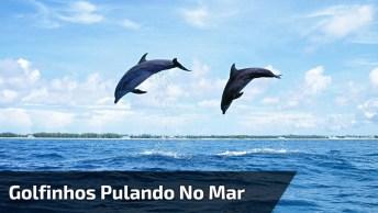 Golfinhos Pulando No Mar, Que Cena Mais Alegre E Divertida, Confira!