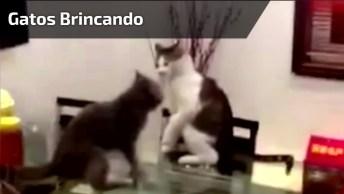 Golpe 'Mata Gato', Compartilhe Com Seus Amigos Do Facebook!