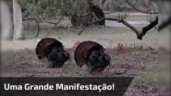Grande Manifestação Contra O Natal, As Cenas São Muito Fortes, Confira!
