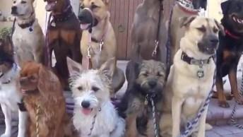 Grupo De Cachorros Posando Para Foto Em Frente De Uma Igreja!