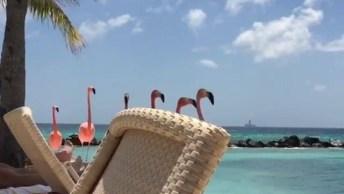 Grupo De Flamingos Passando Pela Sua Tela, Que Ave Mais Linda!