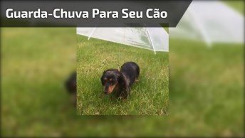 Guarda-Chuva Para Seu Cãozinho, Olha Só Que Ideia Muito Legal!