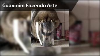 Guaxinim Fazendo Arte, Veja Como Este Animalzinho É Arteirosinho!