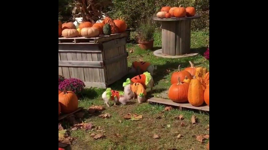 Halloween chegou com um grande ataque de fofura