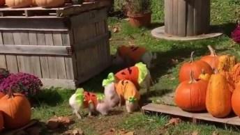 Halloween Chegou Com Um Grande Ataque De Fofura, Que Lindinhos!