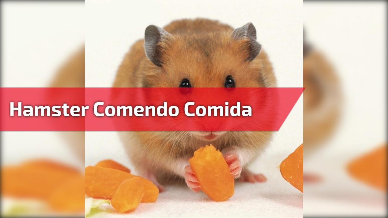 Hamster comendo comida, ou melhor escondendo nas bochechas, hahaha!!!
