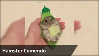 Hamster Comendo Folhinha Em Caminha Em Formato De Legume, Olha Só Que Fofo!