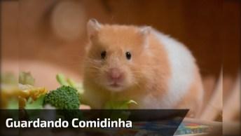 Hamster Guardando Comidinha Na Boquinha, Olha Só Que Espertinho!