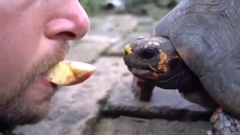 Homem Alimentando Tartaruga Com A Boca, Ele Tem Coragem Hein!