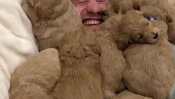 Homem É 'Enterrado' Por Cachorros - Veja O Vídeo E Se Divirta!
